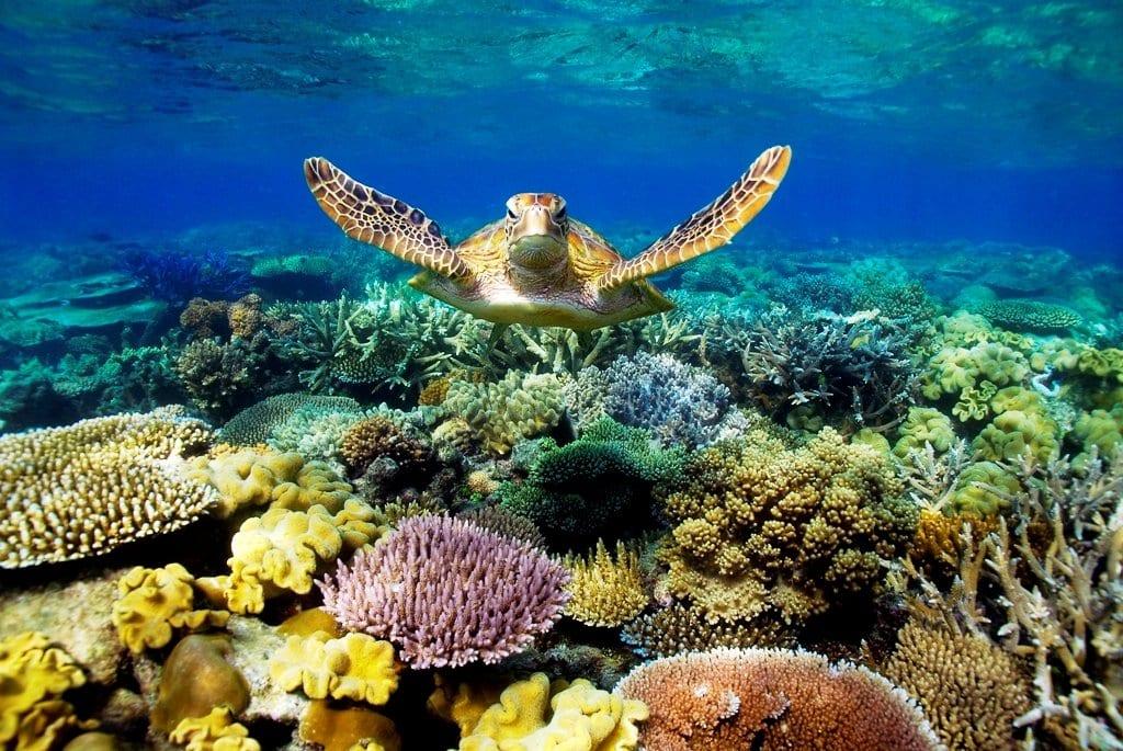 10 fatos incríveis sobre os oceanos