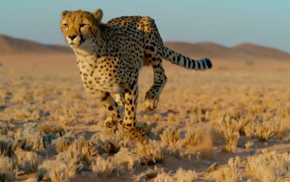 10 animais que poderiam entrar pro Livro dos Recordes