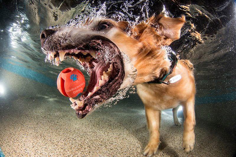 10 cachorros muito engraçados embaixo d'água