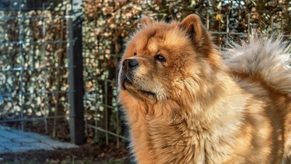 Qual raça de cachorro combina com seu signo?