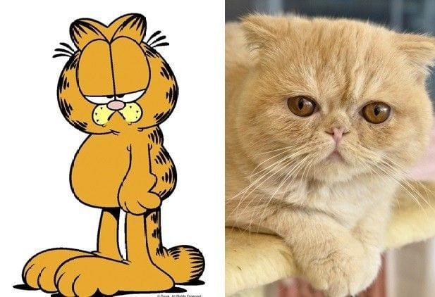 8 animais de desenhos animados na vida real