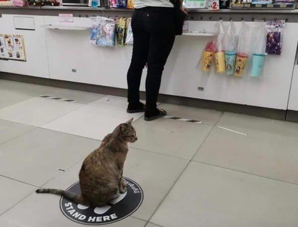 Até os animais estão praticando o distanciamento social!