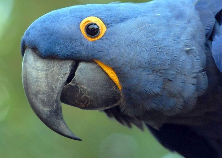 11 animais típicos da fauna brasileira